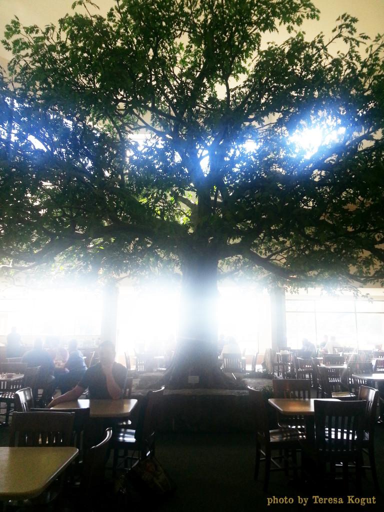 Sauder 35 tree