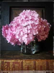pink hydrangea photo shoot 1