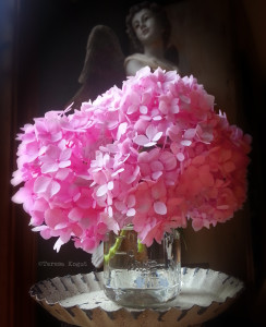 pink hydrangea photo shoot 4